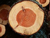 各种木材缺陷的名称、定义和对材质的影响