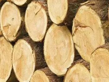 木材的干缩和湿胀