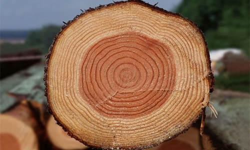 含水率变化与木材变形