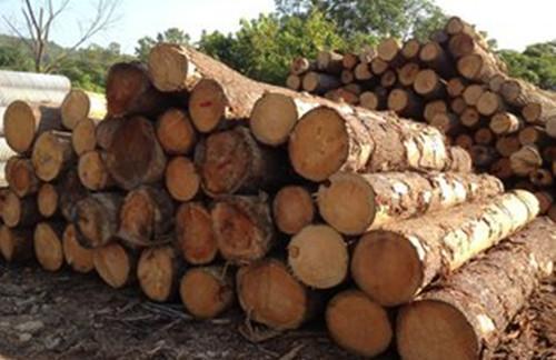 木材上游热下游冷 中间在囤货?