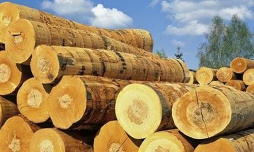 木业人必看:各国木材禁令对中国进口木材市场的影响