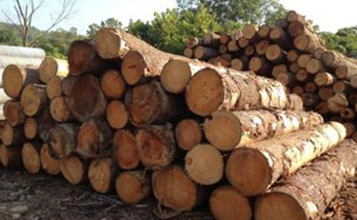 甘肃武威陆港外贸常态化 木材口岸将投入运营