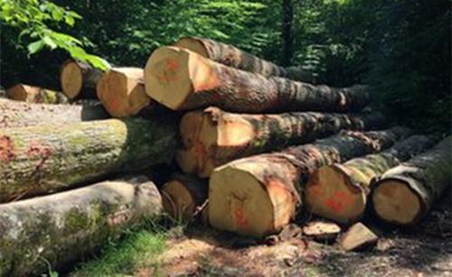 江苏常熟口岸木材进口突破300万方