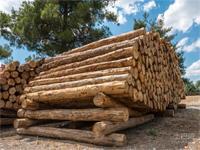 木材市场涨声一片 却并未推动市场复苏