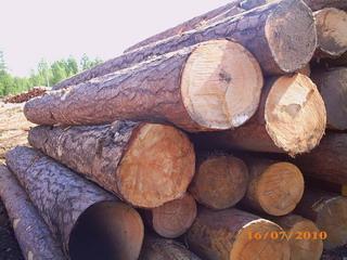 橡胶木开始旺热起来了!
