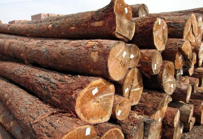 红木原料暴涨5成 倒挂木材比家具还贵