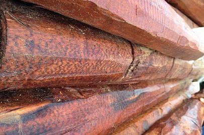 世界上最轻和最重的木材