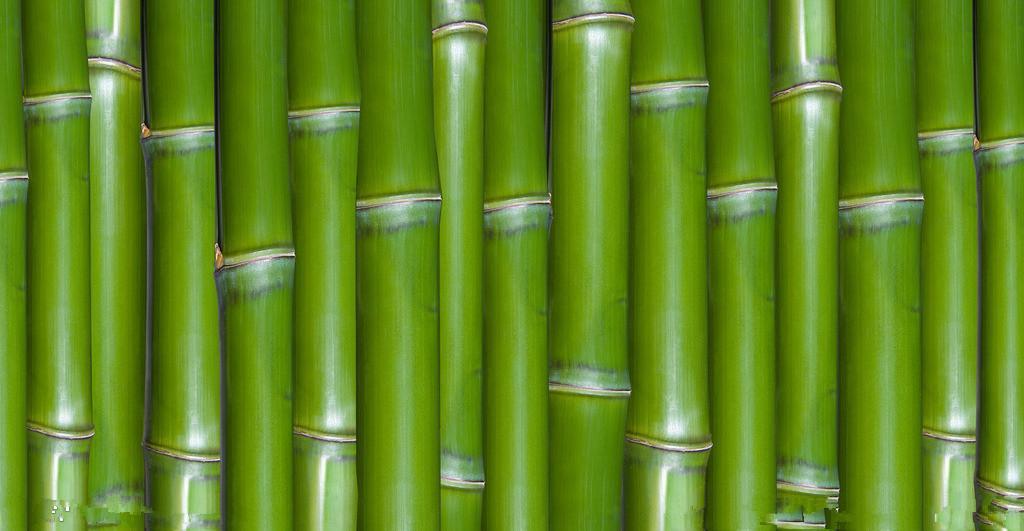 如何加工处理湿木头和湿竹子