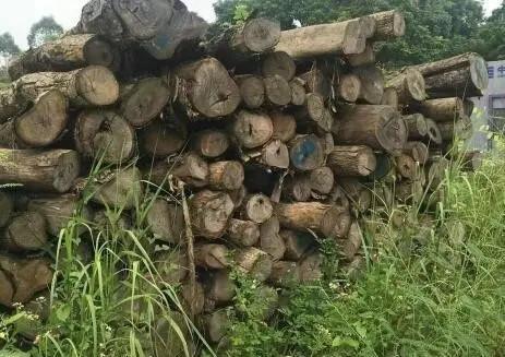 环保让木材涨价已不重要 倒闭危机使企业致命