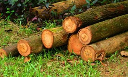 年末逼近木材淡季氛围明显