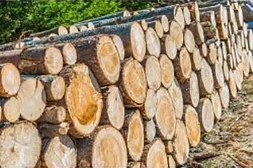 码放木材,原来还有这么多讲究!