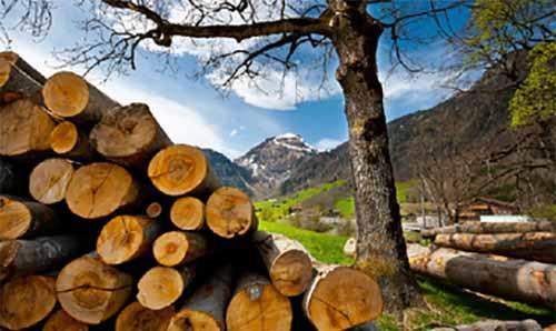 马来西亚原木短缺对木材行业的影响和动荡