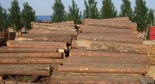 国内木材需求增长 致软木价格不断上升