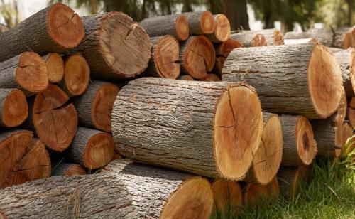 3.6万平米武汉大花岭木材市场基本完成拆除!