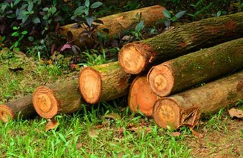 加拿大木材外涨内跌,太仓等口岸的spf出货缓慢