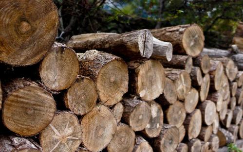 上半年德国木材贸易增长