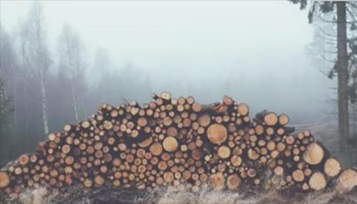 木材产量持续下滑?俄罗斯、新西兰、美国成主要进口国