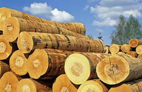 2018年重庆林业产业综合产值达1200亿元