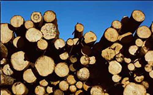 芬兰满载锯木的火车开往中国内陆市场
