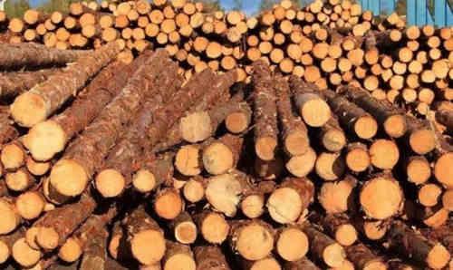 美国木业出口企业陷入困境
