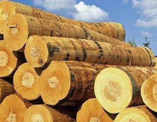 未来几个月欧洲木材和窗户行业需求有可能放缓