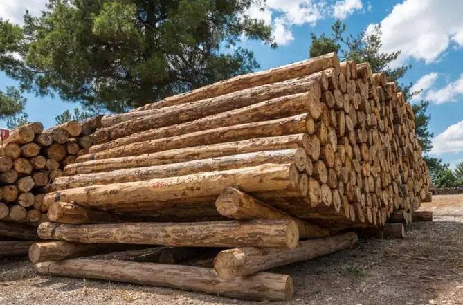 木材如何干燥
