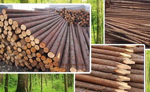 林业产业增速放缓 结构更趋合理