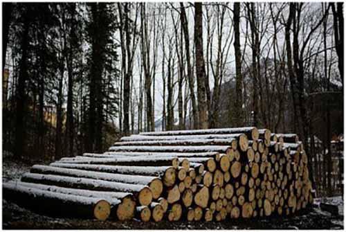 郑州新密市林业局对调入木材严把复检关
