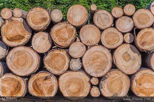 前7个月越南承天顺化省木材出口同比增长近40%