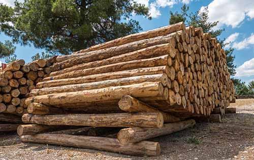 费县: 金融助力木业升级 为产业发展注入新动能