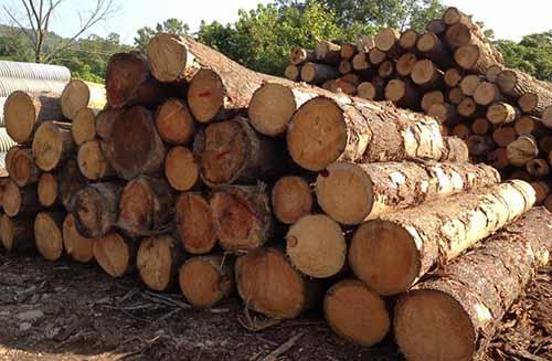 俄罗斯工贸部:禁止对华出口木材是不切实际的