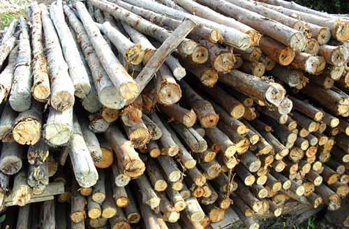 木材加工企业大面积停产,木材价格曲线上涨!