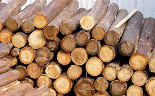 河北唐山将建成华北最大木材专业码头